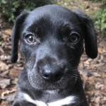 Adoptable (Official) Georgia Dogs for October 23, 2018
