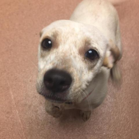 Dog adoption Archives | Page 21 of 142 | GaPundit