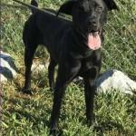 Adoptable (Official) Georgia Dogs for November 16, 2018