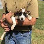 Adoptable (Official) Georgia Dogs for November 14, 2018