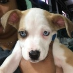 Adoptable (Official) Georgia Dogs for April 23, 2019