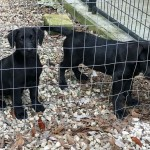 Adoptable (Official) Georgia Dogs for April 15, 2019