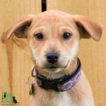 Adoptable (Official) Georgia Dogs for May 16, 2019