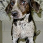 Adoptable (Official) Georgia Dogs for May 3, 2019