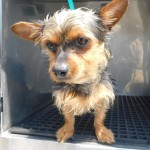 Adoptable (Official) Georgia Dogs for June 5, 2019