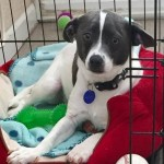 Adoptable (Official) Georgia Dogs for June 27, 2019