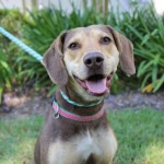 Adoptable (Official) Georgia Dogs for June 7, 2019