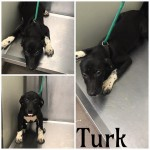 Adoptable (Official) Georgia Dogs for June 17, 2019