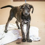 Adoptable (Official) Georgia Dogs for July 19, 2019