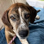 Adoptable (Official) Georgia Dogs for July 18, 2019