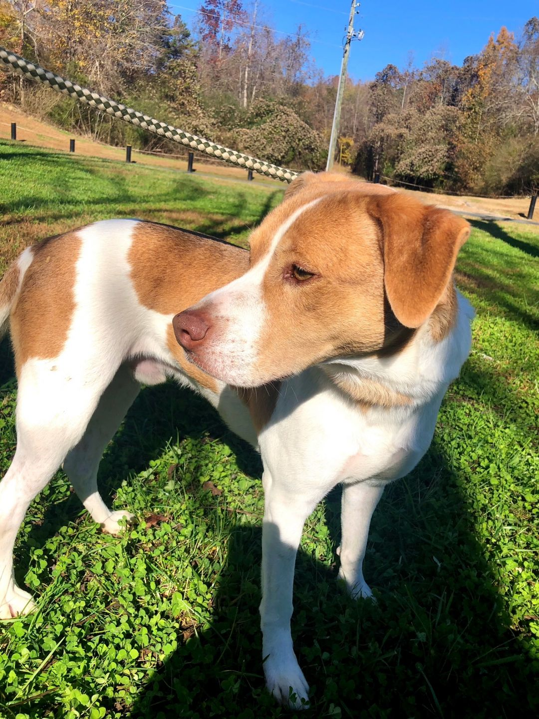Adoptable (Official) Georgia Dogs for August 8, 2019