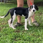 Adoptable (Official) Georgia Dogs for September 6, 2019
