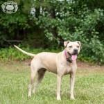 Adoptable (Official) Georgia Dogs for September 25, 2019