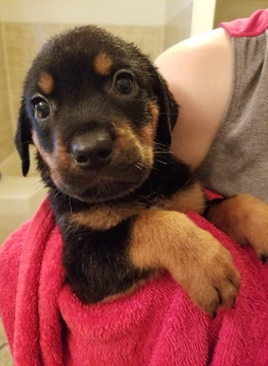 Dog rescue Archives | GaPundit