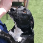 Adoptable (Official) Georgia Dogs for September 24, 2019