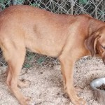Adoptable (Official) Georgia Dogs for September 13, 2019