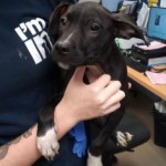 Adoptable (Official) Georgia Dogs for October 31, 2019