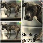Adoptable (Official) Georgia Dogs for October 29, 2019