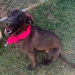 Adoptable (Official) Georgia Dogs for November 19, 2019