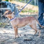Adoptable (Official) Georgia Dogs for November 20, 2019