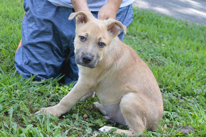 Hershey Animal Rescue Foundation