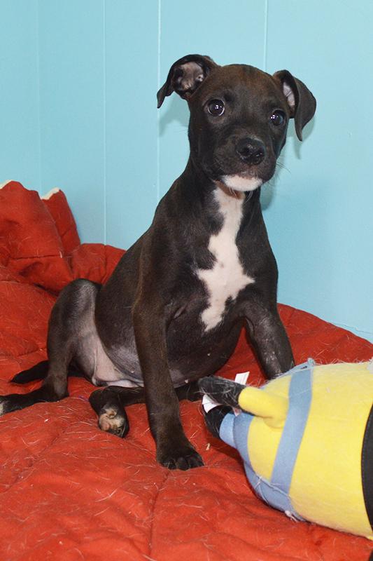 Jasmine Animal Rescue Foundation