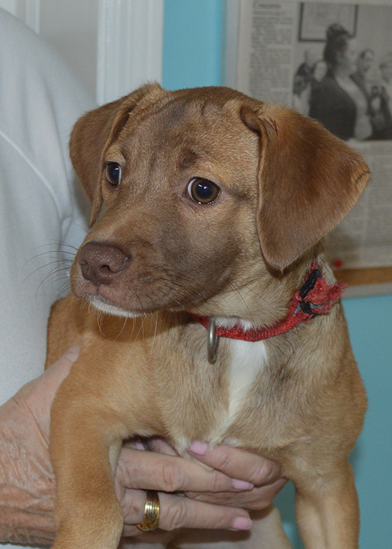 June Animal Rescue Foundation