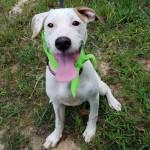 Adoptable (Official) Georgia Dogs for November 11, 2019