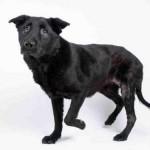Adoptable (Official) Georgia Dogs for November 5, 2019
