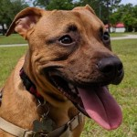Adoptable (Official) Georgia Dogs for December 31, 2019