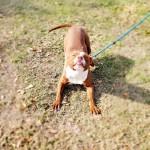 Adoptable (Official) Georgia Dogs for December 30, 2019