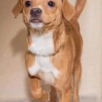 Adoptable (Official) Georgia Dogs for January 14, 2020