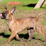 Adoptable (Official) Georgia Dogs for January 10, 2020