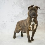 Adoptable (Official) Georgia Dogs for January 28, 2020