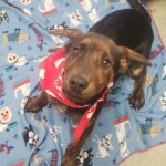 Adoptable (Official) Georgia Dogs for January 24, 2020