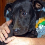 Adoptable (Official) Georgia Dogs for January 29, 2020
