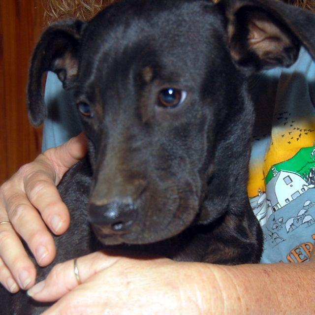 Leroy Angel Dog Rescue