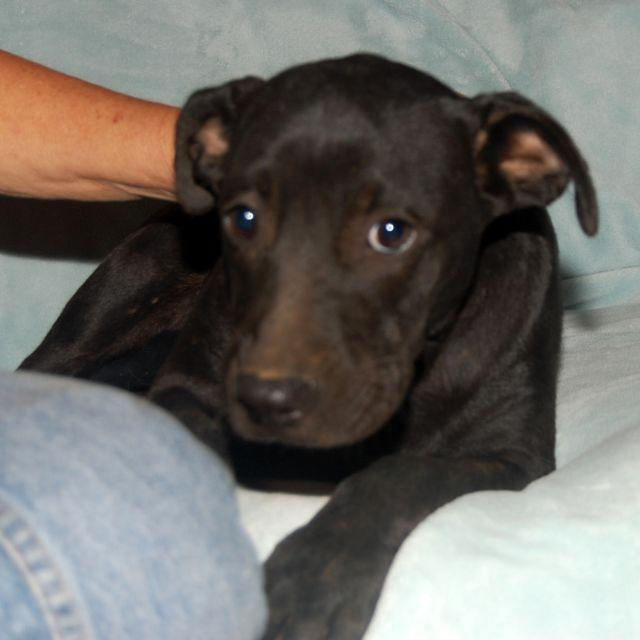 Lola Angel Dog Rescue