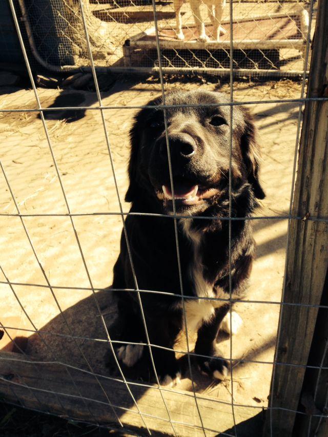 Rambler Angel Dog Rescue