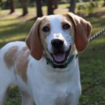 Adoptable (Official) Georgia Dogs for February 24, 2020
