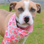 Adoptable (Official) Georgia Dogs for February 21, 2020