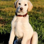 Adoptable (Official) Georgia Dogs for February 11, 2020