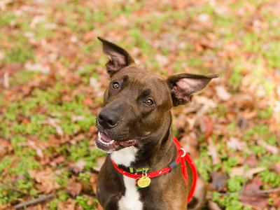 Regina Athens Canine Rescue