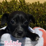 Adoptable (Official) Georgia Dogs for February 19, 2020