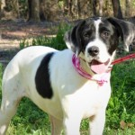 Adoptable (Official) Georgia Dogs for March 10, 2020
