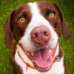 Adoptable (Official) Georgia Dogs for March 3, 2020