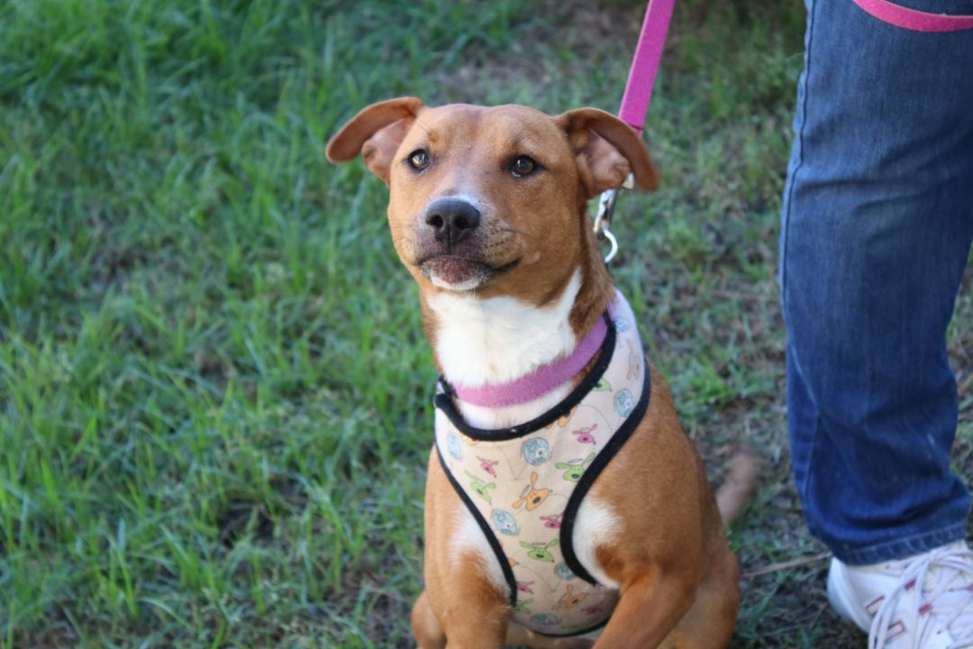Adoptable Official Georgia Dogs For May 11 2020 Georgia Politics Campaigns And Elections